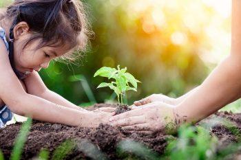 ילדה שותל עץ